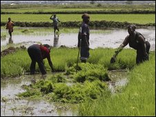 Food production must rise -UN