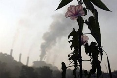 A flower grows near thermal power plant in Nagpur